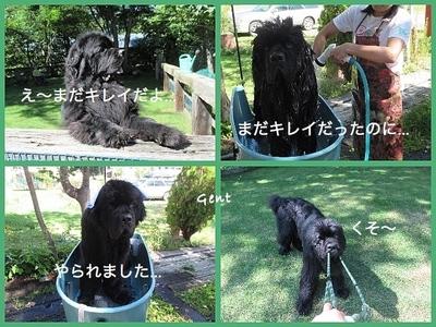 Collage_Fotor0907_Fotor.jpg