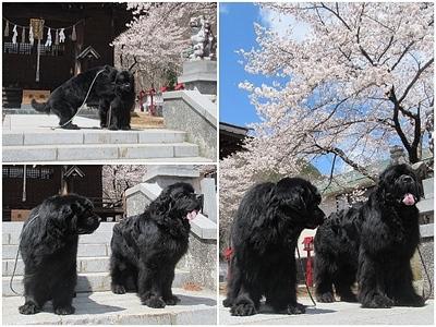 Collage_Fotor200424_Fotor.jpg