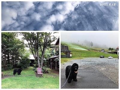 Collage_Fotor210818_Fotor.jpg