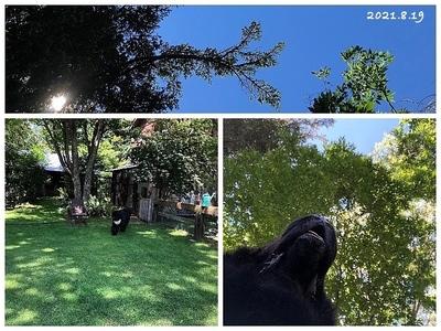 Collage_Fotor210819_Fotor.jpg