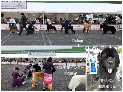 Collage_Fotor2G1_Fotor.jpg