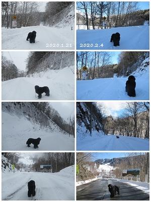 Collage_Fotor3_Fotor.jpg