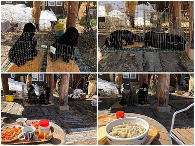 Collage_Fotorお外ランチ_Fotor.jpg