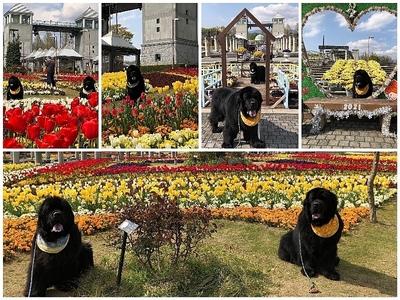 Collage_Fotorぐんまフラワーパーク_Fotor.jpg