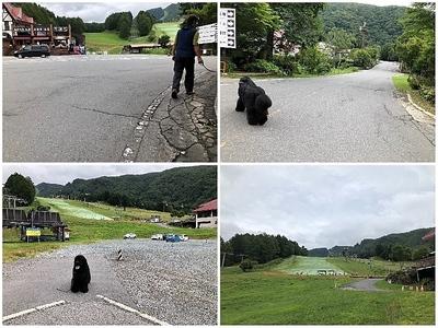 Collage_Fotorスキー場_Fotor.jpg
