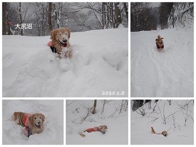 Collage_Fotorスー_Fotor_Fotor.jpg