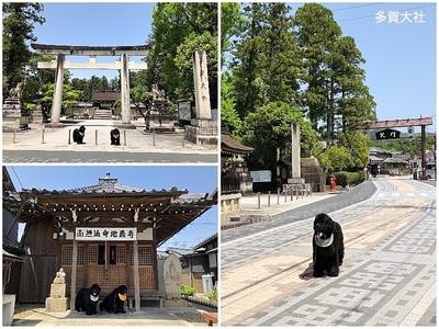 Collage_Fotor多賀大社_Fotor.jpg