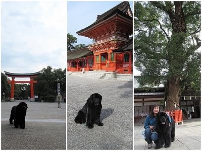 Collage_Fotor宇佐神宮_Fotor.jpg
