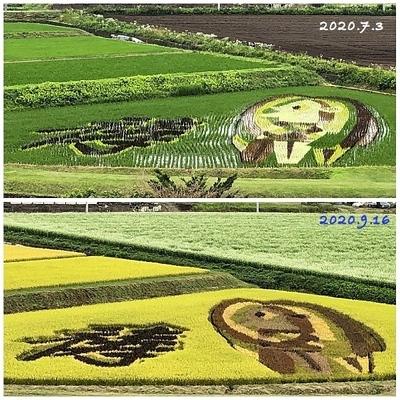 Collage_Fotor田んぼアート_Fotor.jpg