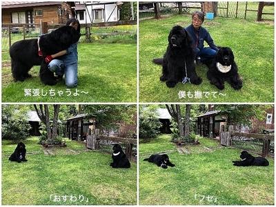 Collage_Fotor練習2_Fotor.jpg