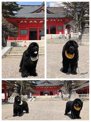 Collage_Fotor赤城神社_Fotor.jpg