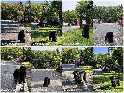 Collage_FotorR120_Fotor.jpg