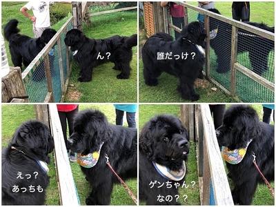 Collage_FotorWゲンちゃん2_Fotor_Fotor.jpg