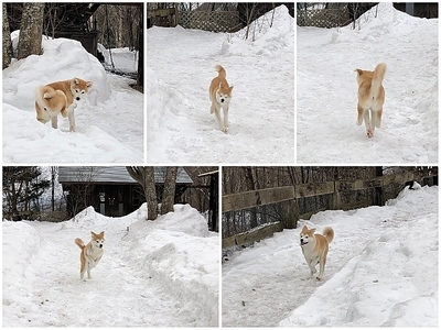 Collage_Fotorsakura_Fotor.jpg