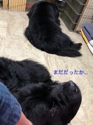 IMG_0410_Fotor.jpg