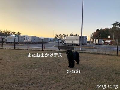 IMG_2858_Fotor.jpg